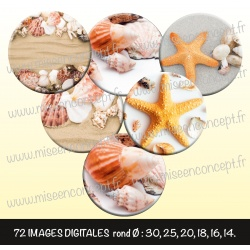Images : Coquillages, étoiles de mer - Planches : Rondes & Ovales, Rondes et Ovales