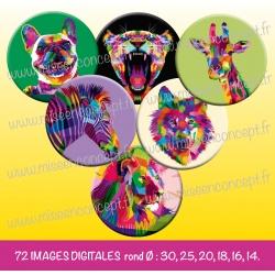 Images : animaux colorés : chat, girafe, tigre, zèbre  - Planches : Rondes & Ovales, Rondes et Ovales