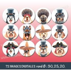 Images : chiens déguisés - Planches : Rondes & Ovales, Rondes et Ovales